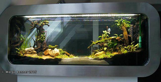Aquarium Bild 1