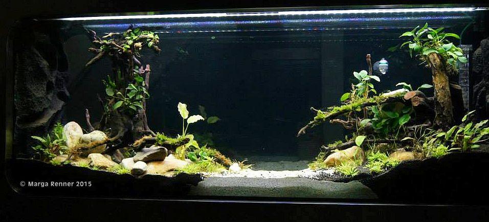 Aquarium Bild 2