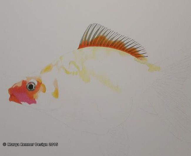 Goldfisch Bild 1