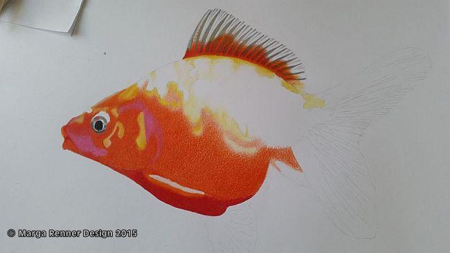 Goldfisch Bild 2