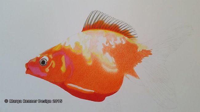 Goldfisch Bild 3