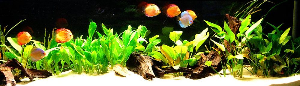 Ulli`s Aquarien – und Terrarienseiten